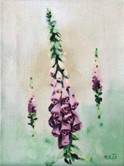 Šumavské květiny