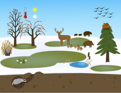 Ilustrace Zimní příroda