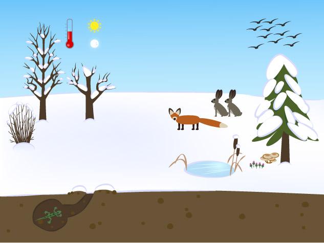 ilustrace k infografice Zimní příroda